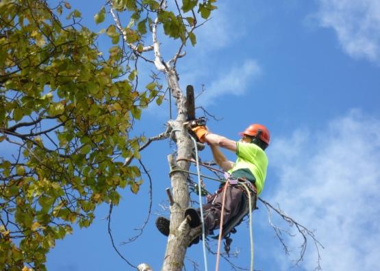 Как правильно спилить дерево - можно ли сделать это самому и куда обращаться?