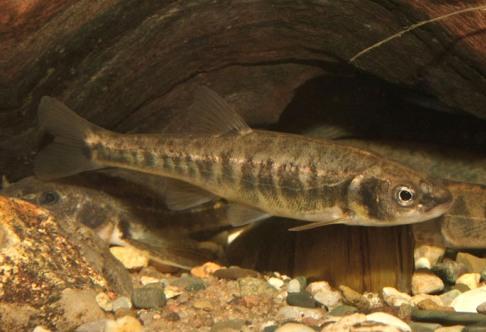 Как разводить рыбу в пруду на даче, какую рыбу лучше разводить?