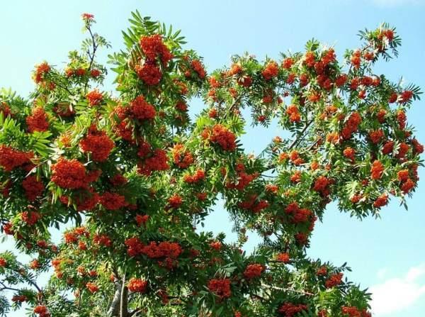 Какие деревья посадить перед домом и в других местах участка?