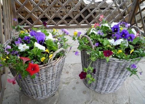 Кашпо для цветов своими руками. Из чего и как сделать красивое кашпо