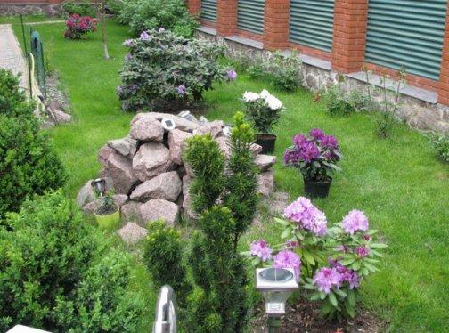 Рододендрон - фото сортов кустарника, посадка, выращивание и уход