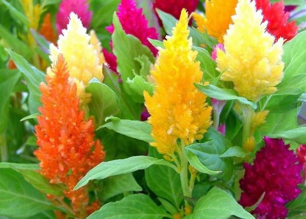 Сухоцветы - фото и названия, идеи букетов и композиций для интерьера